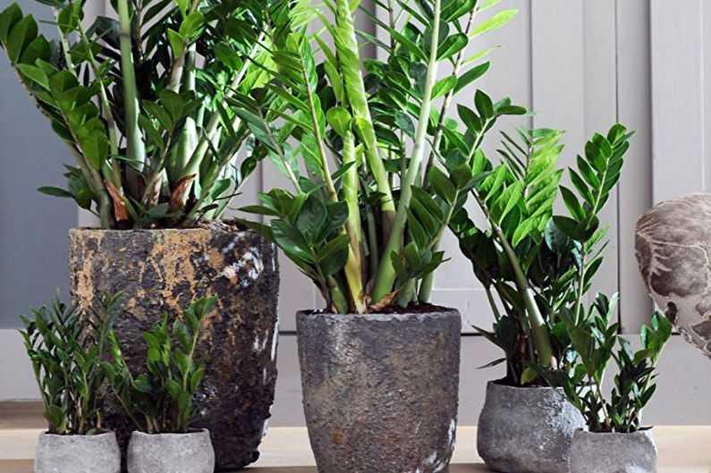 Гид: 10 модных растений для дома